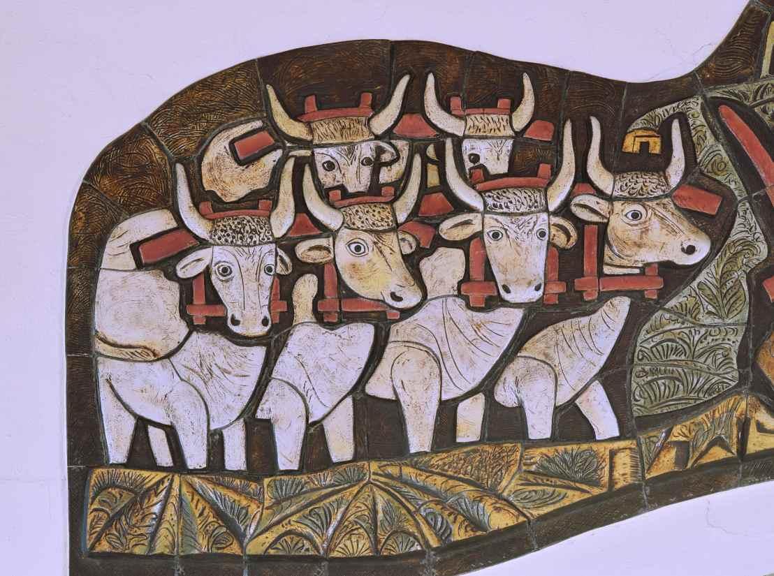 Close-up-Oxen2